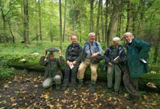 Bilowieza forest a group