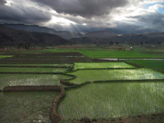 rice paddies in Madagascar